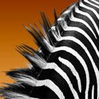 Zebrafell Tasche